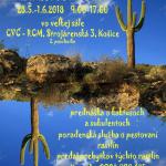 vystava-kaktusov2
